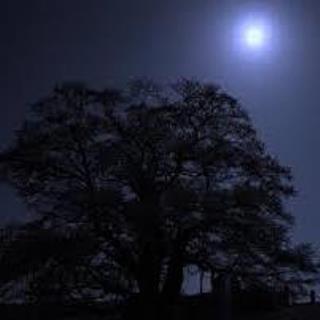 「醍醐桜まつり」 夜.jpg