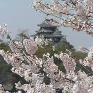 岡山城と桜01.jpg