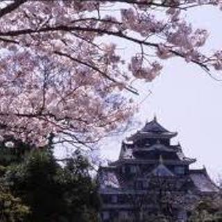 岡山城と桜05.jpg