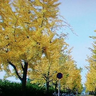 運動公園・岡山大学 周辺.jpg