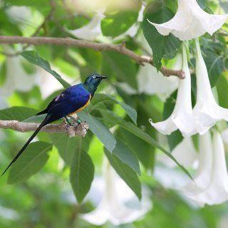 鳥と花 例.jpg